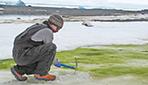Антарктика начала зеленеть из-за повышения температур